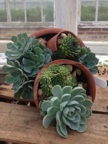 Thrifty garden ideas: succulents in a broken pot