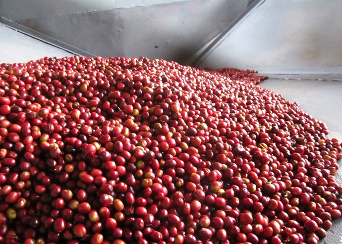 Specialty Coffee Processing