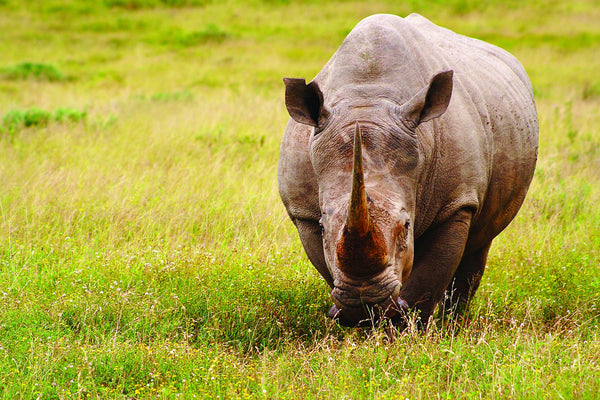 Charities We Support: International Rhino Foundation