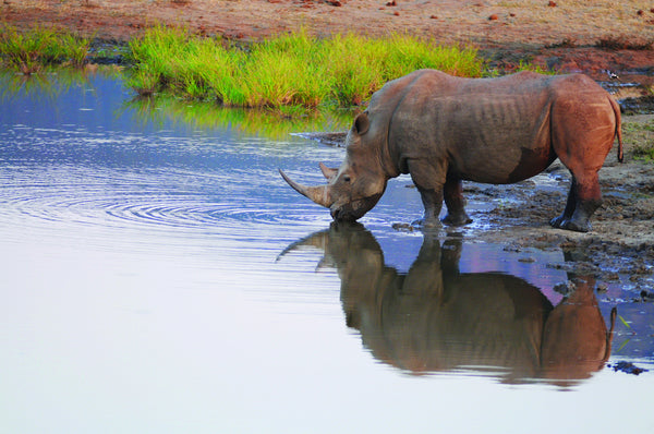 Rhinos and Elephants are in CRISIS!!