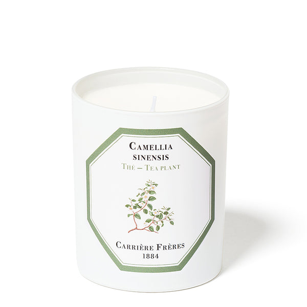 The - Tea Candle 6.5oz by Carriere Freres