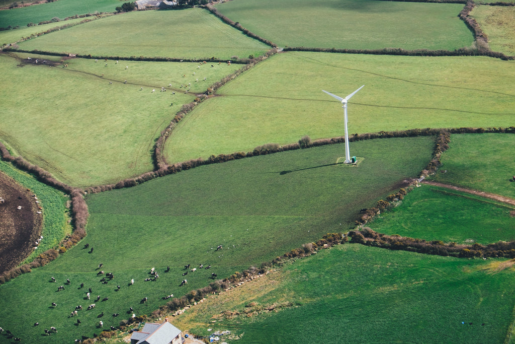 cows in a field with a wind turbine