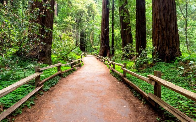 Muir Woods in San Francisco