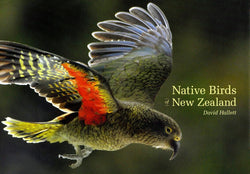 Native Birds of New Zealand