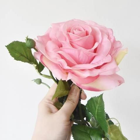 Decorative Rose Flower, Baker-Miller Pink