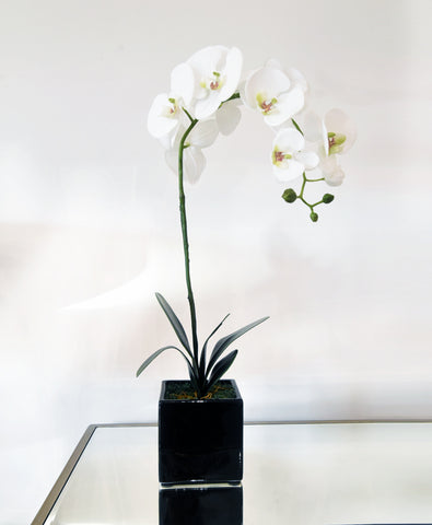 Showroom Items: Decorative Flowers with Pots