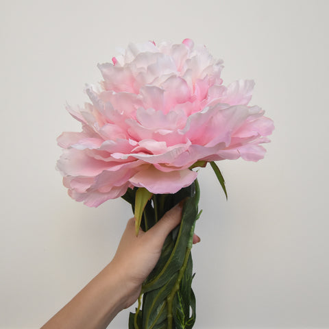 Decorative Peony Belle Flower, Pink