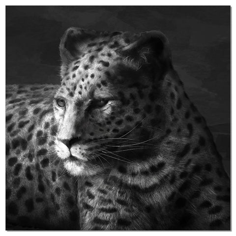 Premium Acrylic Wall Art Cheetah-SB-61253A SKU18181 - Pearl Igloo