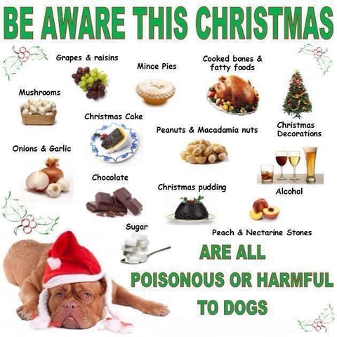 Poisonous Foods For Cats And Dogs