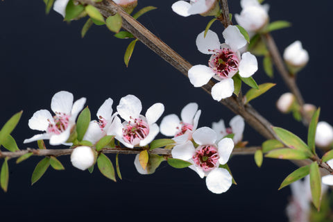 manuka honey for psoriasis