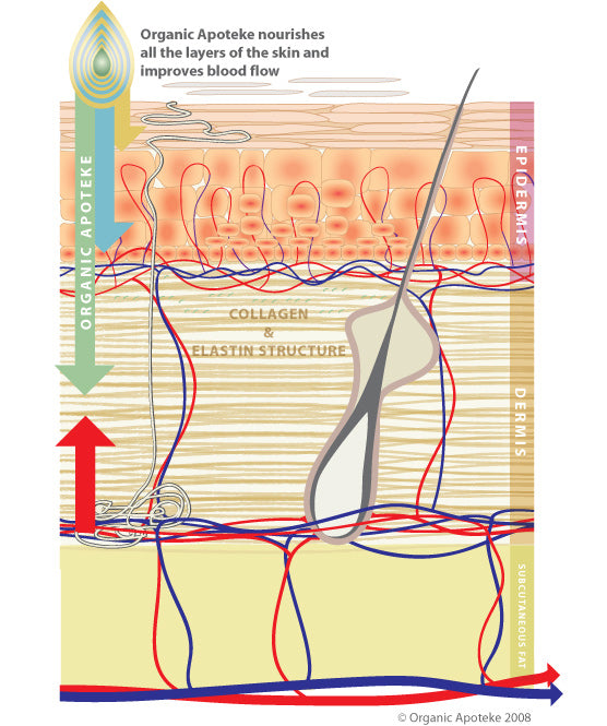 Benefits Skin Diagram
