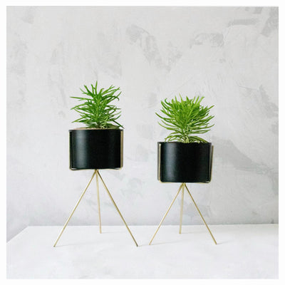 MINIATURE BLACK PLANTER