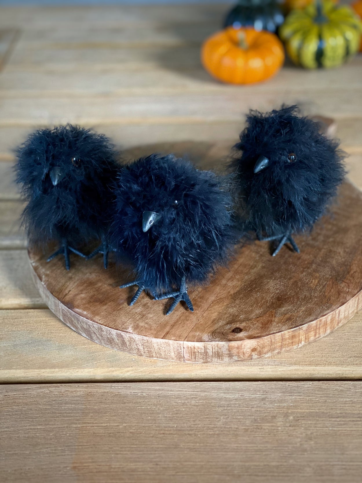 Crow Chicks