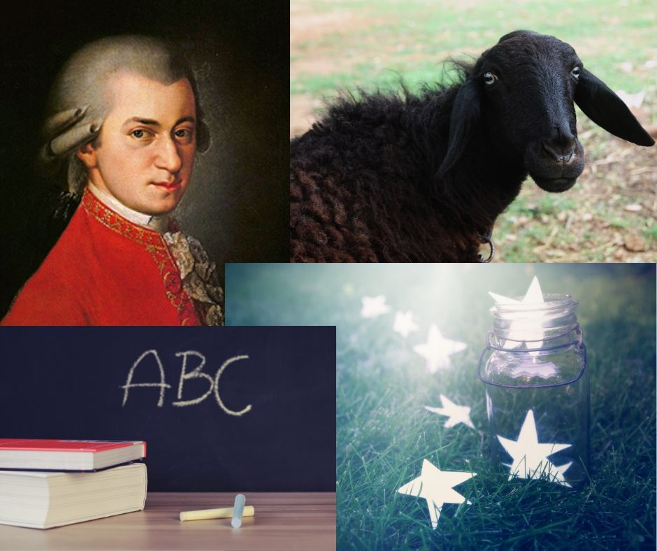 Mozart, black sheep, ABC, Stars