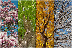 images of 4 different seasons