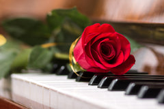 A rose on piano keys representing Fur Elise