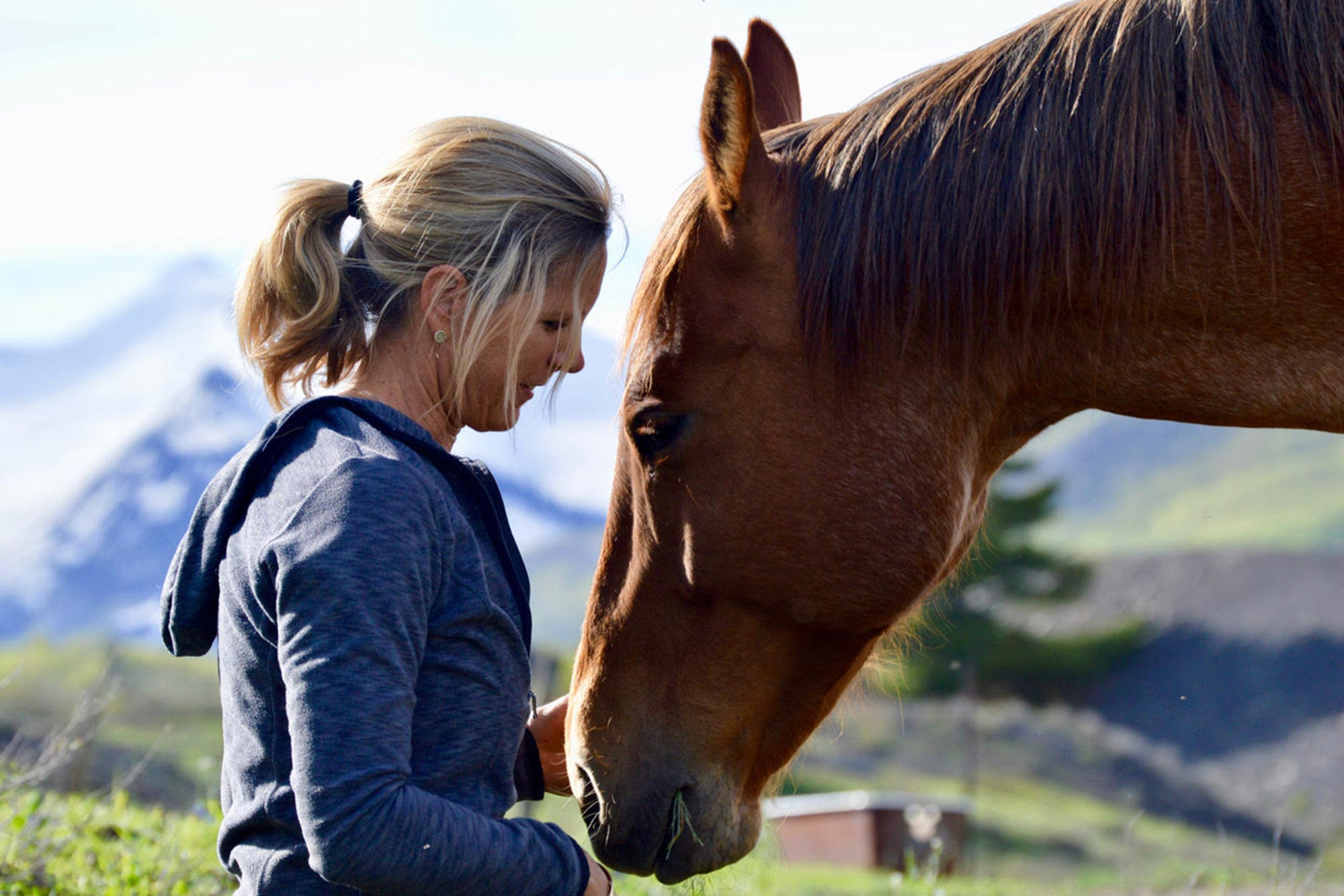Life Coaching with the Horses of Gunnison County