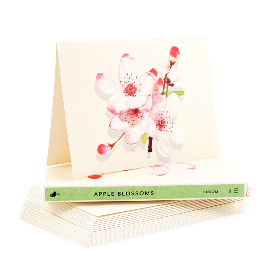 BOXED NOTECARDS - FD- APPLE BLOSSOM