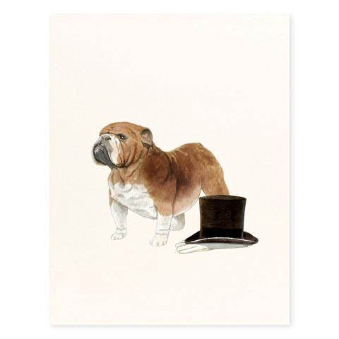 DOG - FD - BULLDOG GENTLEMAN