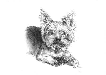 BOXED NOTE CARDS - ODB - YORKSHIRE TERRIER