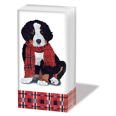 BERNESE MOUNTAIN DOG - TISSUES