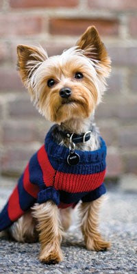 TISSUES DOG - DD - YORKIE IN SWEATER