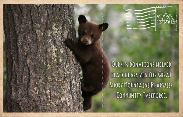 Keeping Black Bears wild in the Great Smoky Mountains