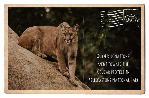 Documenting Cougar Population Trends in Yellowstone National Park