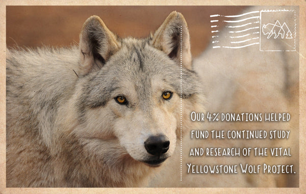 Research of the Yellowstone Wolf Project