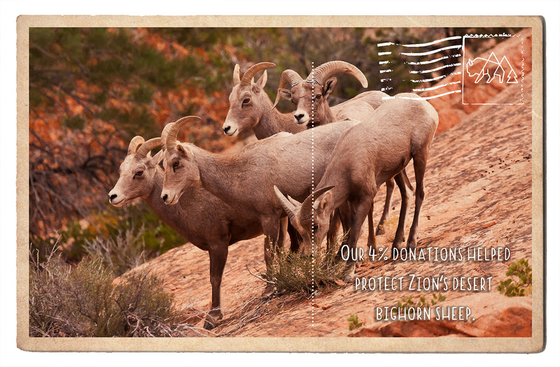 Protect Zion's Bighorn Sheep