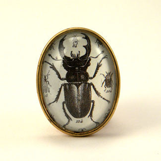 Beetle Juice - Vintage Scientific Beetle Insect Illustration Brooch