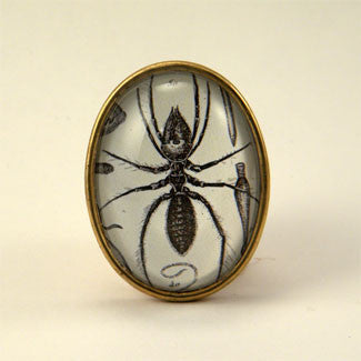 Insectavora Victorian Scientific Ant Engraving Brooch