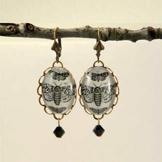 Moths, Moths, Moths Vintage Scientific Insect Illustration Earrings