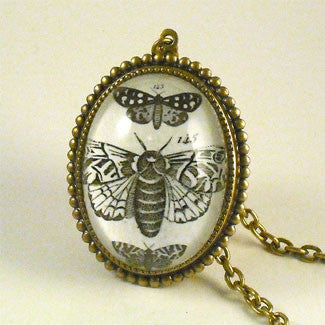 Moths, Moths, Moths Vintage Scientific Insect Illustration Pendant Necklace