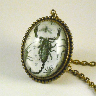 Scorpion Vintage Scientific Engraving Jewelry