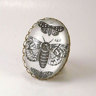 Moths, Moths, Moths Vintage Scientific Insect Illustration Cocktail Ring
