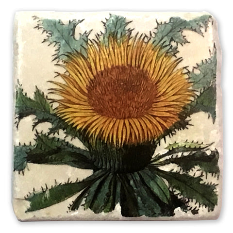 "Dandelion Vintage Botanical Illustration on 4""x4"" Tumbled Marble Tile"