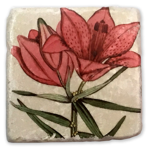 "Day Lily Vintage Botanical Illustration on 4""x4"" Tumbled Marble Tile"