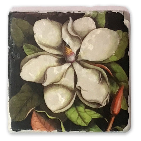 "Magnolia Vintage Botanical Illustration on 4""x4"" Tumbled Marble Tile"