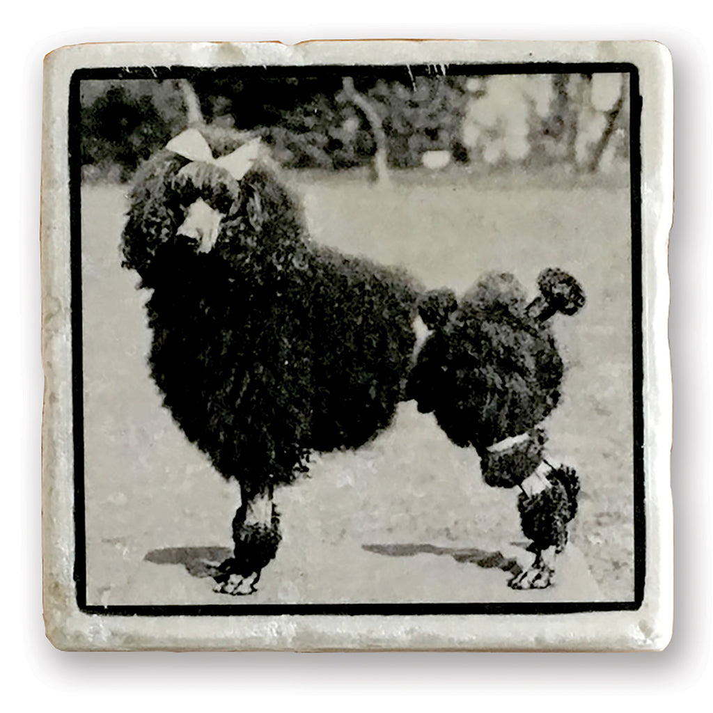 "Fancy Poodle - Vintage Dog Image on 4""x4"" Marble Tile"