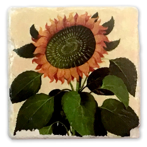 "Sunflower Vintage Botanical Illustration on 4""x4"" Tumbled Marble Tile"