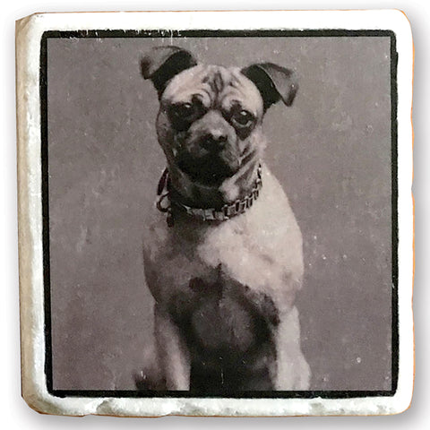 "Old Fashioned Pug - Vintage Dog Image on 4""x4"" Marble Tile"