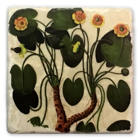 "Water Lily Vintage Botanical Illustration on 4""x4"" Tumbled Marble Tile"