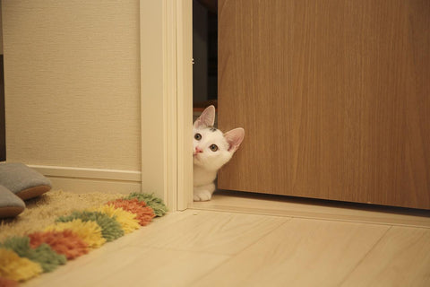 Cat peeping into doorway