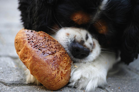Dog eating bread roll