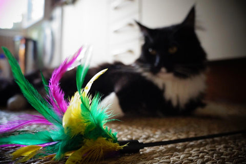black and white cat lying on floor with feather toy in front of it