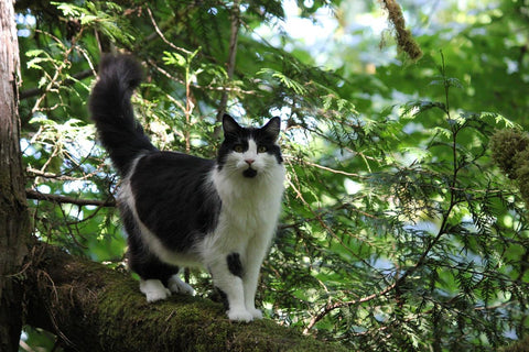 black and white cat on tree branch