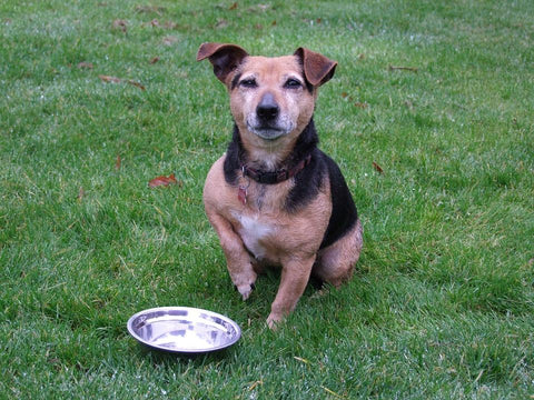 Dog sitting on lawn with an empty bowl in front of it