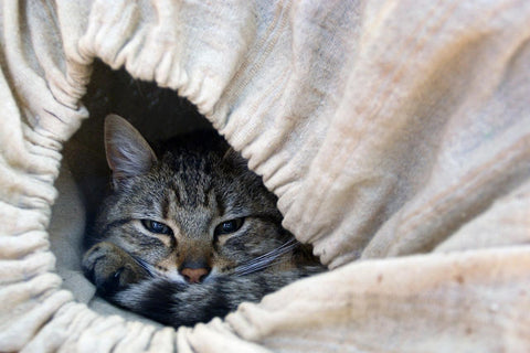 cat lying in sleeping bag