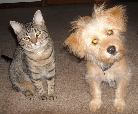 3 Tips To Make A Cat And Dog Good Friends Bonnie And
